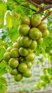 Visit Our Estate Vineyards